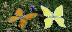 motyle wiosna 1