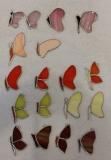 remanent motyle pojedyncze